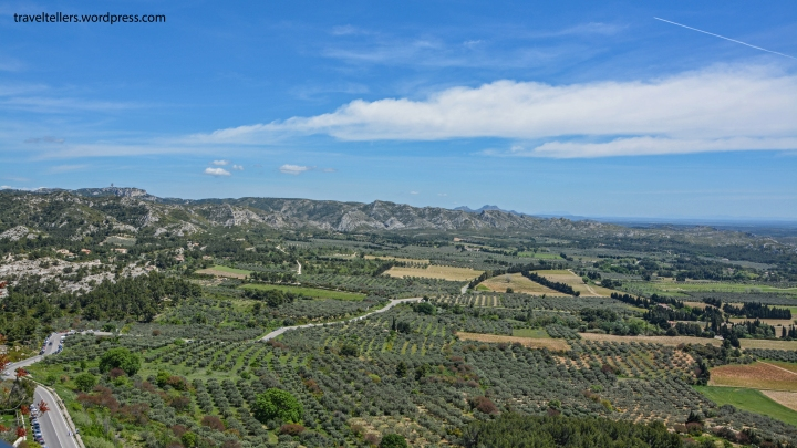 031_Olive trees in the valley-2